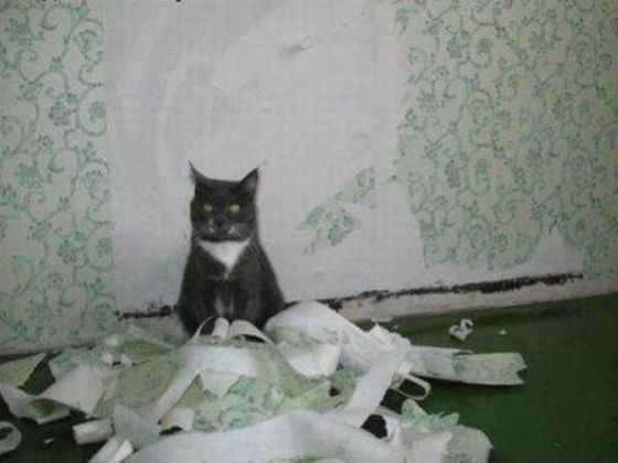 chat ennui betise papier peint