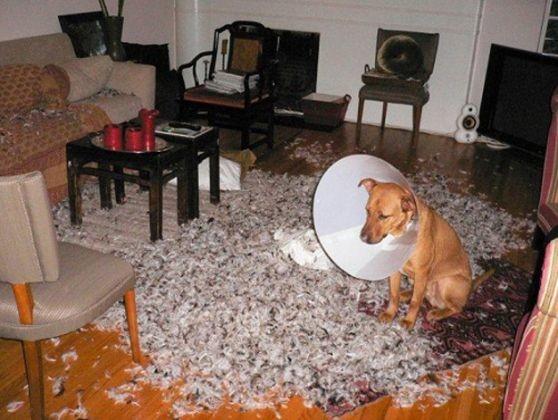 chien betise coussin salon