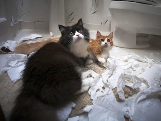chats betise salle de bain