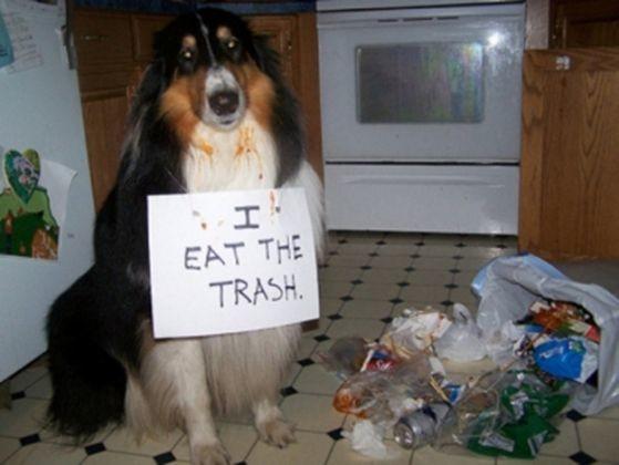 chien betise poubelle