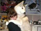chien bras femme