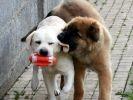 cohabitation entre chiens