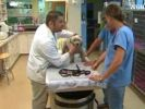 chien errant soigné par vétérinaires