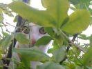 chat dans la nature