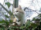chat dans la forêt