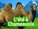chameau à chamonix