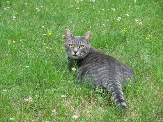 fellow joli chat dans l 39 herbe les plus belles photos de vos animaux en pleine nature. Black Bedroom Furniture Sets. Home Design Ideas