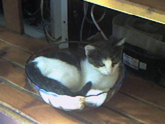 chat dort dans un saladier