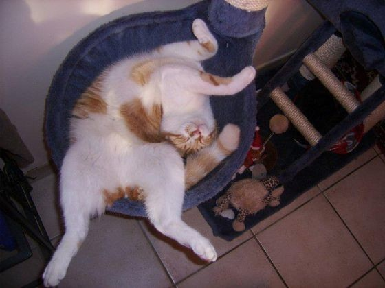 ce chat dort n'importe comment