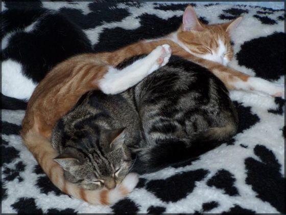 deux chats dorment l'un sur l'autre