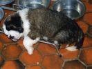 chiot qui dort dans sa gamelle