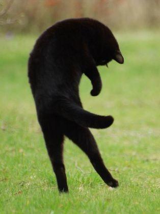 Un chat noir qui semble voler ! - Les plus jolies photos