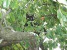 chat noir perché dans un arbre