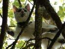 chat perché dans un arbre