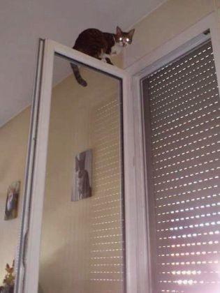 Un chat perch en haut d 39 une fen tre vos animaux qui for Fenetre qui s ouvre en haut