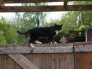 chat sur portail