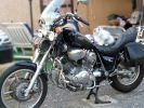 Lapine naine angora sur une moto