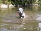 chien eau rivière