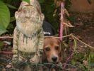 chien caché jardin