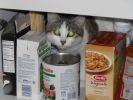 chat caché dans un placard
