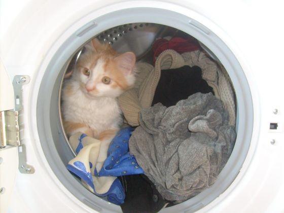 ce chat aurait il envie de faire sa toilette vos. Black Bedroom Furniture Sets. Home Design Ideas