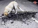 pub chien pedigree