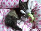 chat et son doudou