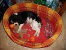 chien dort dans son panier avec son doudou