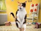 pub litière pour chat