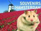 hamster à amsterdam