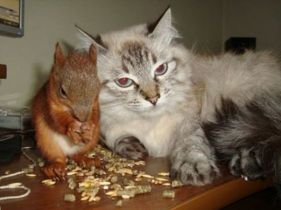écureuil bébé sauvé chat