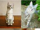 chaton chat évolution