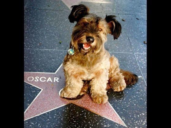 Découvre Ce Qui T A Valu Un Oscar: Oscar à Hollywood, Sur Le Célèbre Walk Of Fame