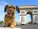un chien sauvé de la mort fait le tour du monde