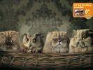 pub nourriture pour chat