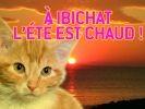chat à ibiza