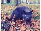 chat automne feuilles morte