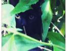 un chat noir caché