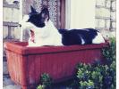 un chat dans un bac à fleurs