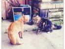 deux chats se rencontrent