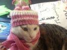 chat écharpe bonnet