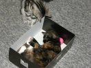 un chat dans une boîte à chaussures