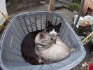 paradis chats île japon