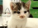 chaton bébé chat