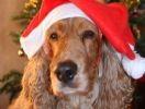 chien déguisement bonnet de noël