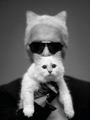 choupette le chat star de Karl Lagerfeld
