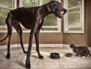 le plus grand chien du monde