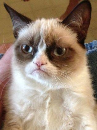 tard chat grincheux grumpy cat