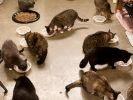 une femme adopte des centaines de chats et fait de sa maison un refuge s