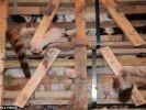 des centaines de chats échappent à la mort en chine